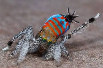 Sparklemuffin and Skeletorus? No, they're not comic book characters — they're two new spider species!