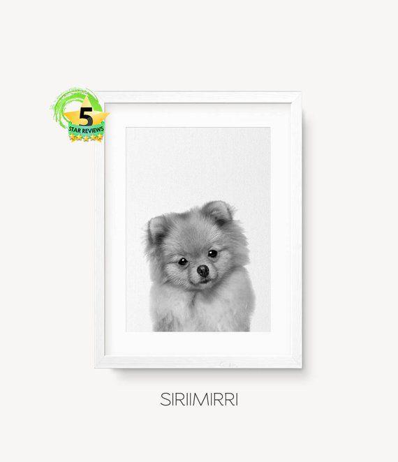Pomeranian Print Pomeranian Spitz Wall Art Pet Print Etsy Printable Art Animal Nursery Animal Print