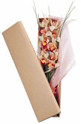 Κουτί με Ορχιδέα Σιμπίντιουμ. Ένα πανέμορφο εξωτικό λουλούδι. Ορχιδέα cymbidium.