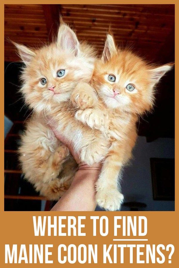 Pin On Cats And Other Furry Cutie S