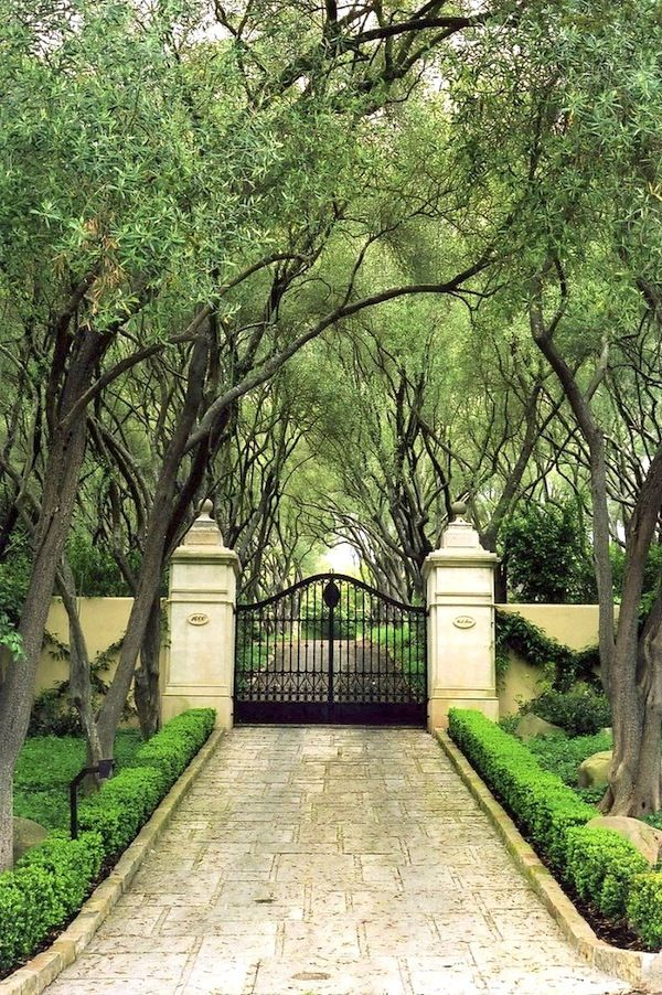 Privacy Fence | Tree Lined Driveway | Curb Appeal | Landscape Design | Brick Pavers