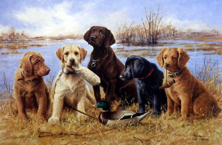 Training A Lab Puppy To Shed Hunt References