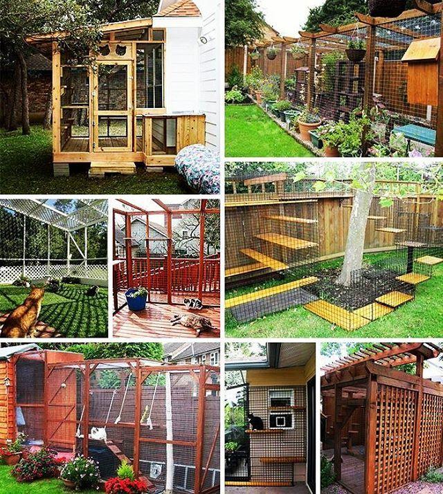 �������� #lofi#kedi#catio#kedievi#catiospaces#2017#catsofinstagram#günaydın#instacat#pet#catlove#hayvanseverler#animals#yaratıcı#pawsup#bahçe#cosy#huzur#comfortable#dekor#design#ev#homesweethome#mimari#architecture#ferah#cool#pinterest ⛺ http://turkrazzi.com/ipost/1519436288259759237/?code=BUWH0D8j5yF