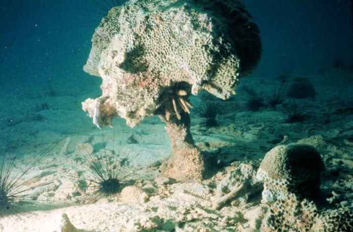 Coral reefs: threats