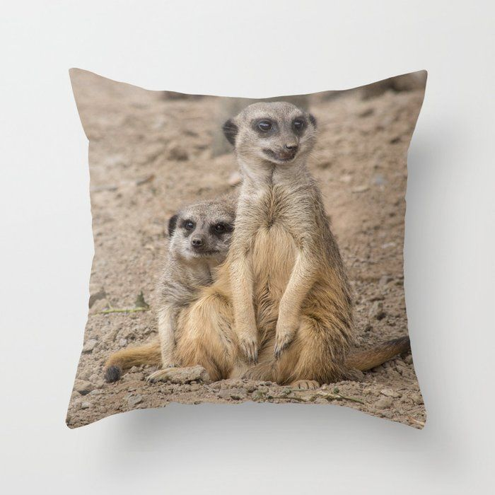 Pin By Haley Redshaw On Nature Animal And Wildlife Pillows Cushions And Blankets African Animals Animals Meerkat
