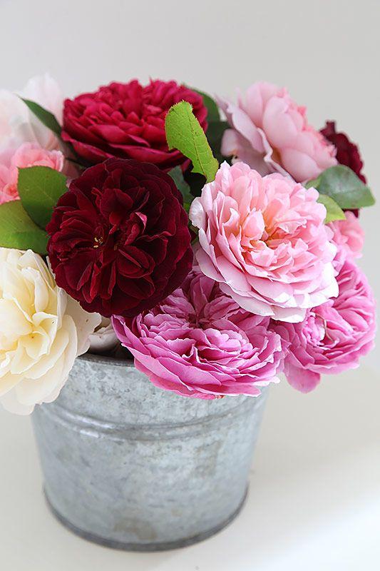 Pin de Jenny Rohrer en Awesome!!!!!! Pinterest Arreglos florales - Arreglos Florales Bonitos