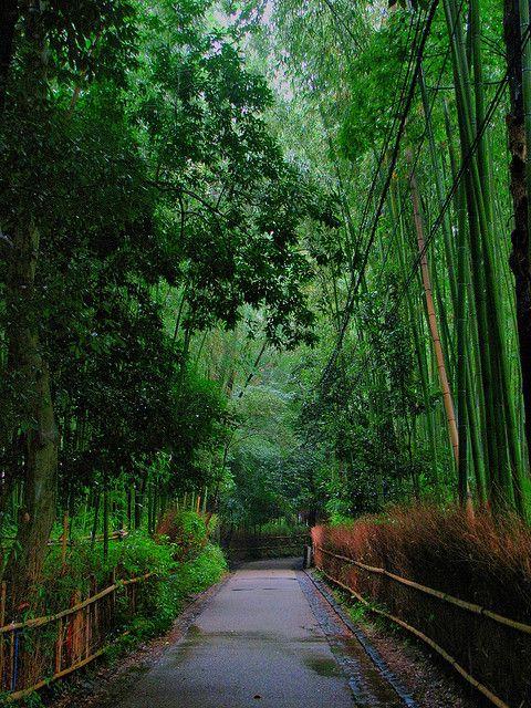Бамбуковый лес Сагано (Sagano Bamboo Forest) в Киото, Япония