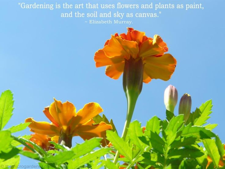 Gardening is the art that uses flowers and plants as paint, and the soil and sky as canvas. More tips @ themicrogardener.com