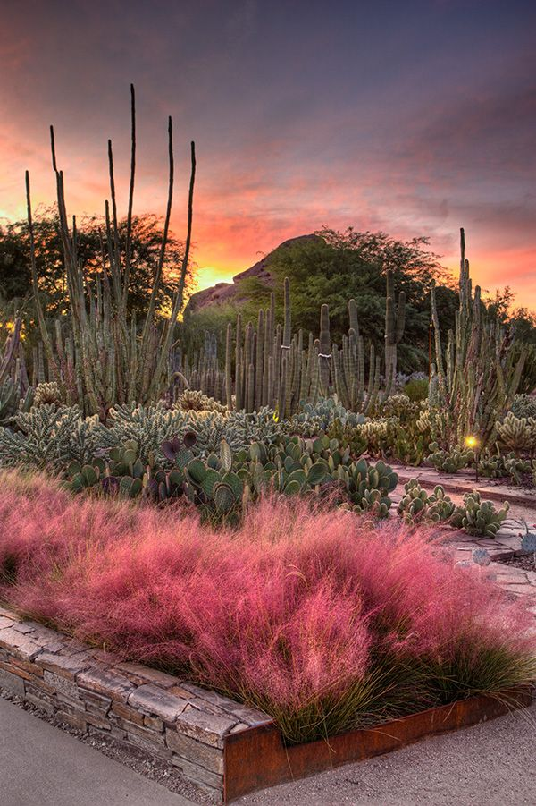 At the Desert Botanical Garden in Phoenix, plants suited to the arid climate of the Sonoran and other deserts thrive, including a large sampling of agave, cacti, and other succulents.