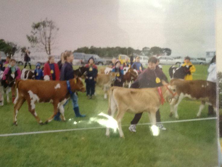 Calf club 1984