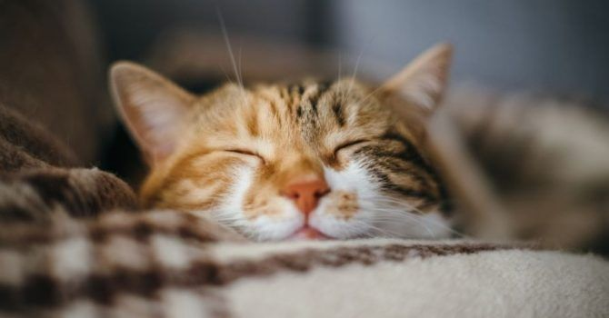 Look At This If You Want To Know About Cats -Click For More Details