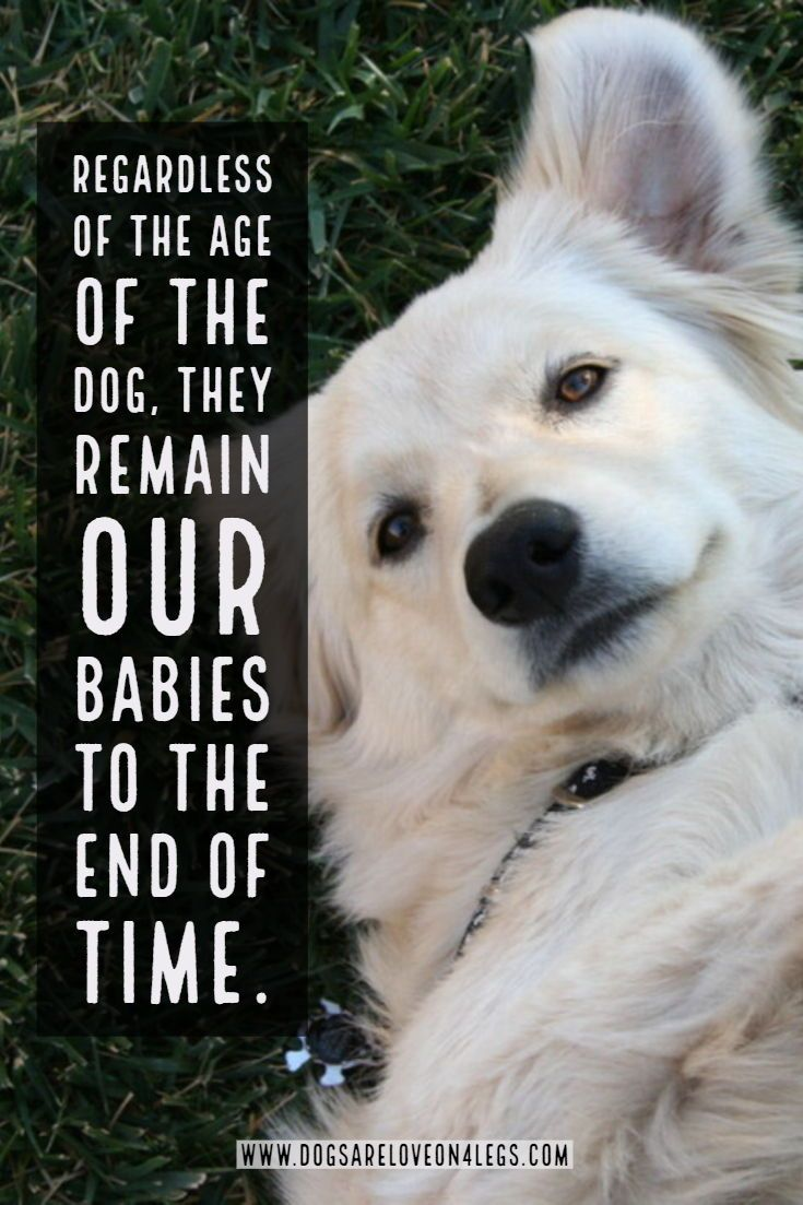Dog Quote Regardless Of The Age Of The Dog Dog Dog Quotes