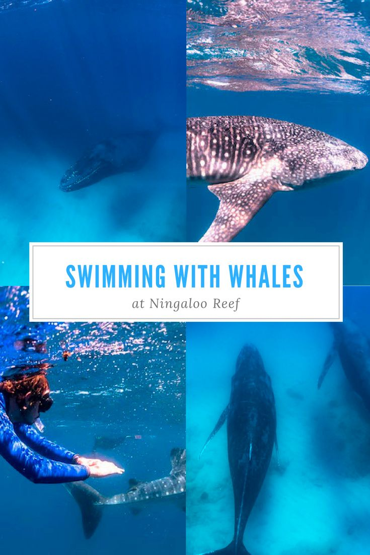 Swim with humpbacks