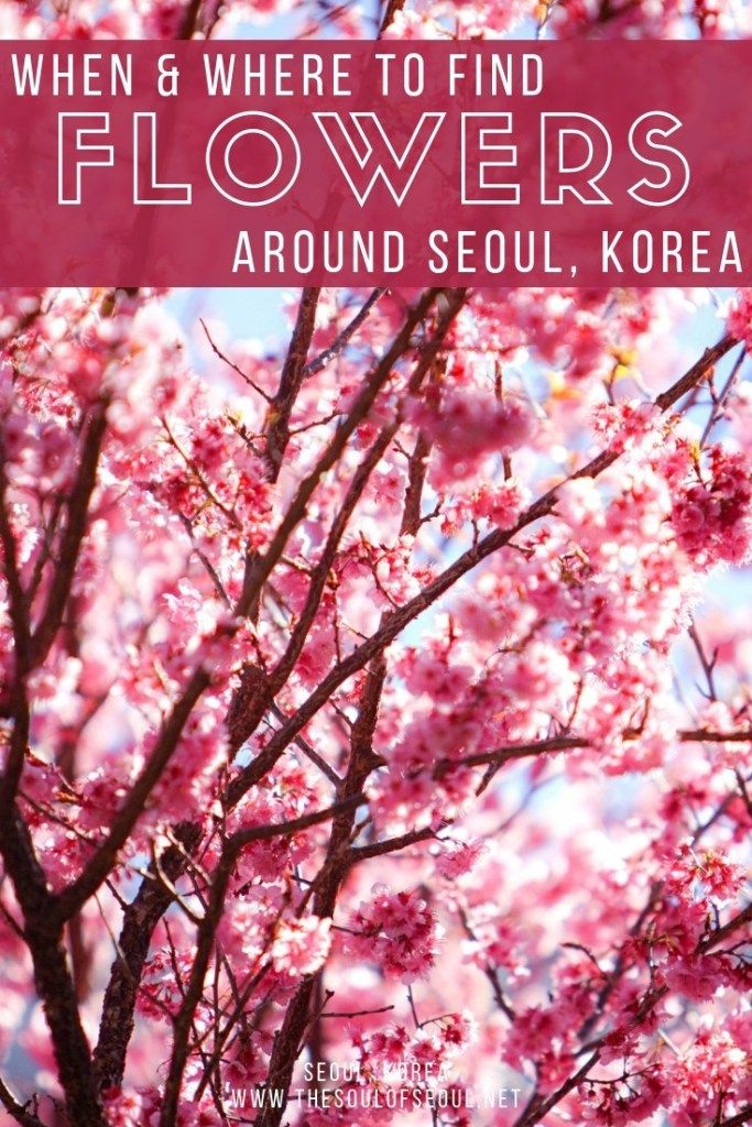 Pin On South Korea