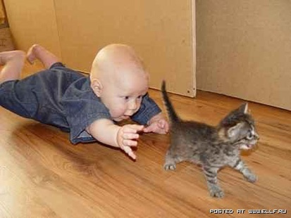 Run kitty, run!Animal Pictures, Funny Cat, Pets, Baby Kittens, Children, Baby Toys, Funny Baby Pictures, Kitty, Funny Kids