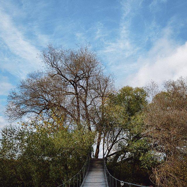 Красивая осень с высоким голубым небом и солнцем, вернись к нам!!!😭 #pineriverhotel #всердцелеса #отдыхотгорода #отдыхссемьей #красотаприроды #подвесноймост
