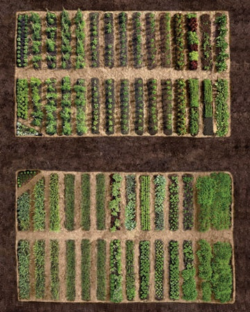 Martha Stewart's Rotation of the Earth - each year vegetables are planted in different beds to lessen disease problems and interrupt the life cycle of pests that are attracted to a particular plant. Crop rotation also allows the soil to replenish after hosting heavy feeders, and alternating deep-rooted and fibrous-rooted crops from year to year improves soil structure.
