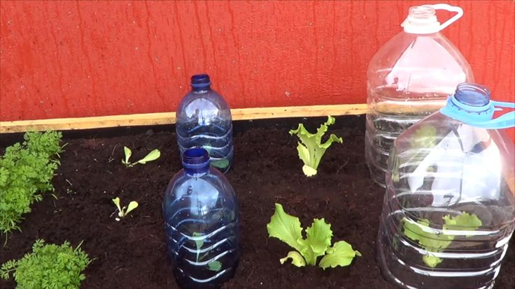 Como Hacer Mini Invernaderos Para Nuestras Plantas y asi protegerlas de las bajas temperaturas o de los caracoles y babosas que se los quieran comer