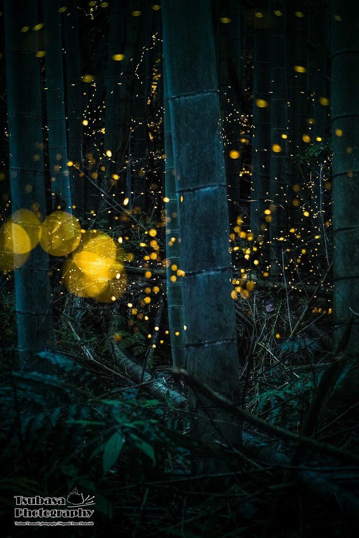 蛍 Firefly by Tsubasa Yamauchi  #Firefly #蛍