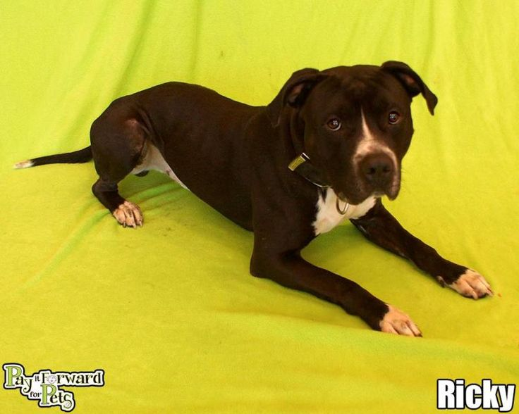 Adoptable Dogs Akron Ohio