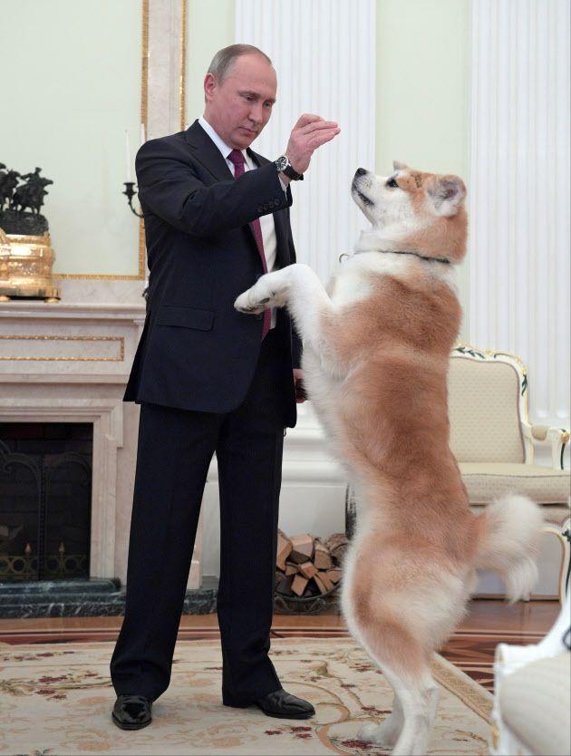 来日前の7日、12年に秋田県知事から贈られた秋田犬「ゆめ」と遊ぶプーチン氏(大統領府提供)=AP