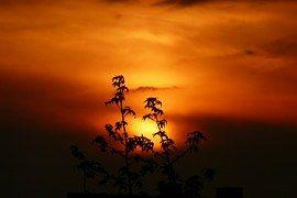 Zachód Słońca, Krajobraz, Roślin