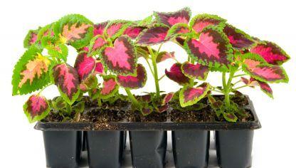 17 mejores im genes sobre exterior en pinterest plantas for Matas ornamentales