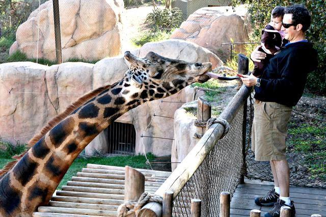 10 Fun Things to Do in Santa Barbara with Kids: Feed a Giraffe