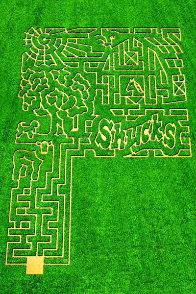 Shucks Corn Maze