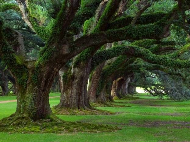 I could just lay beneath these ancients and dream the day away...