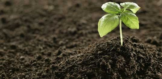 DIY Fertilizers: The Cheap & Easy Way >>> http://www.myfamilysurvivalplan.com/diy-fertilizers-the-cheap-easy-way/