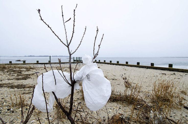 Long Beach Township Proposes Ban on Plastic Bags for Municipality's Businesses - The SandPaper