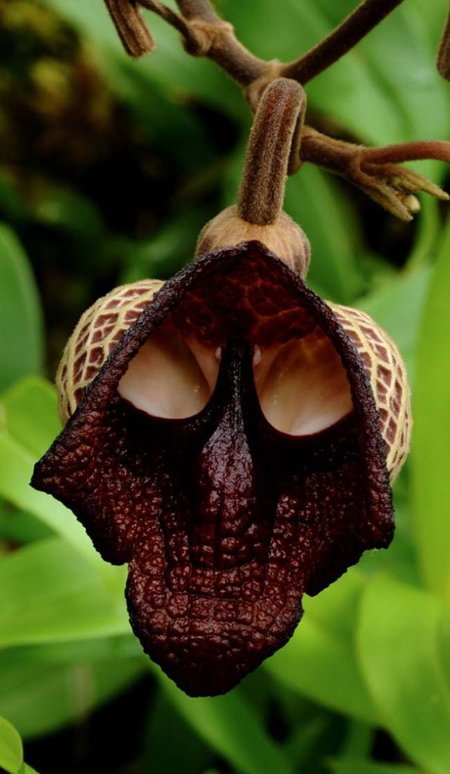 21 Rare Flowers That Simply DO NOT Look Like Flowers At All. My Jaw Nearly Hit The Floor!