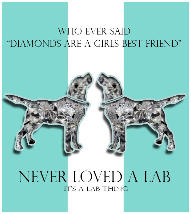Labs & Ladies: Diamonds with Fur | Its a Lab Thing
