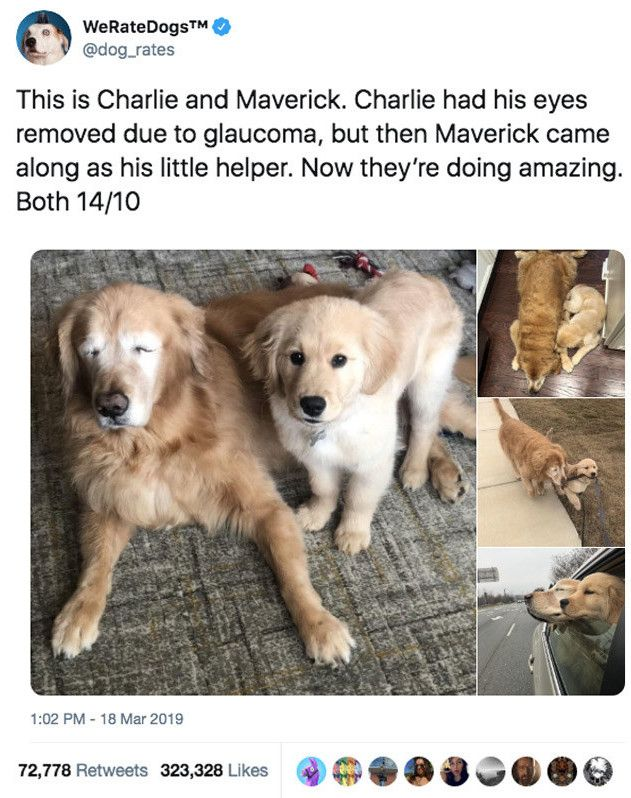 This Blind Dog Has A Seeing Eye Puppy And It S The Purest Thing