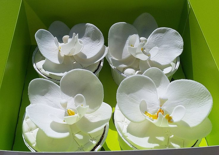 cupcake orchids