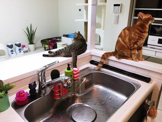 賃貸diy 猫キッチン侵入防止扉 猫 インテリア キッチン 目隠し キッチン