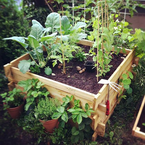 46 best images about lazy on pinterest gardens raised beds and square meter - Square meter vegetable garden ...