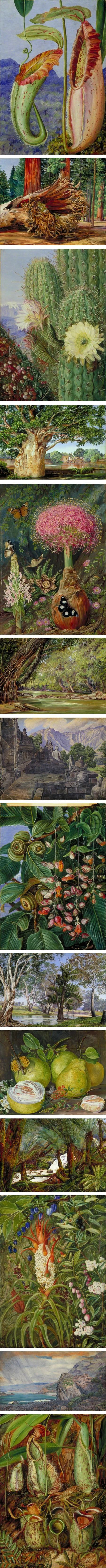 Marianne North, Victorian botanical art and landscapes. I like her in contrast to Rousseau- who did not get to travel and see his jungles in person...