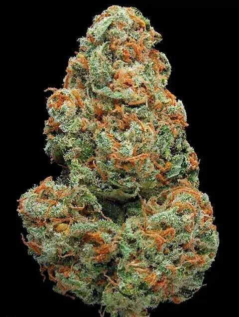 High Quality cancer cannabis oil for patients with illness like cancer, pain, insomnia, anxiety, liver problem, epilepsy and more. we do discreet and no signatures at delivery. The parcel has no label indicating it is carrying the 420. We do give high discounts for orders...call or whatsapp us  +1 775 499 8657 or visit our site at https://www.weedonlinesupplier.com/