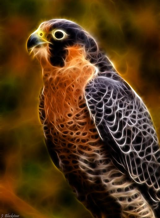 Peregrine Falcon - Fractal Photograph by Jordan Blackstone - Peregrine Falcon - Fractal Fine Art Prints and Posters for Sale