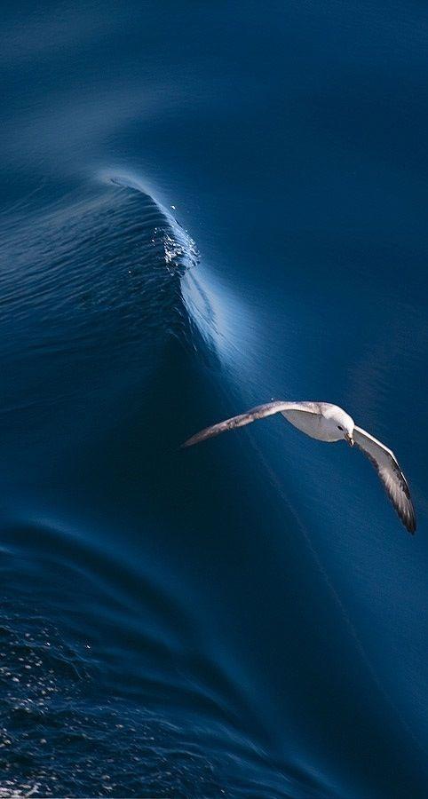 #Blue Ocean // White Bird