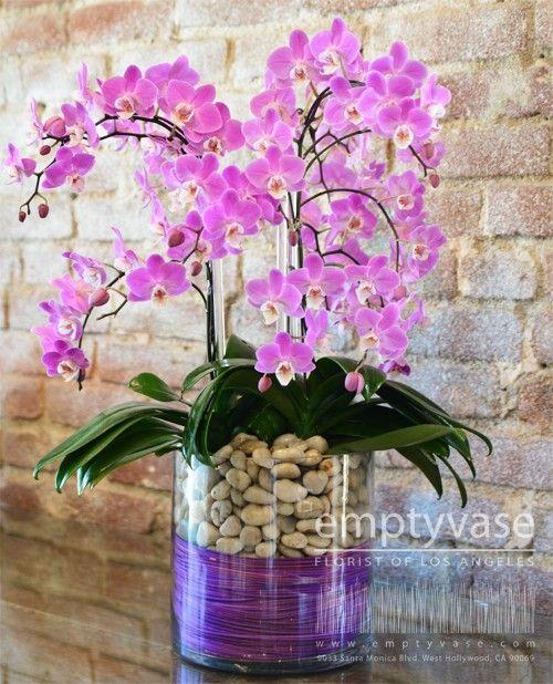 Orchid Queen