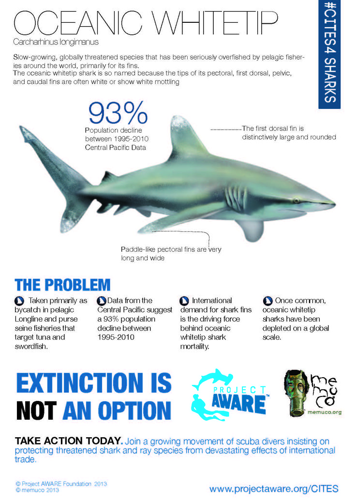 an overview of the characteristics of different shark species Guide to shark identification species descriptions, and you will be directed to a page providing a summary of characteristics shared by all members of that.