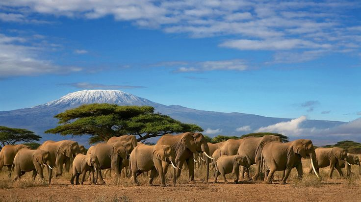 African Elephant Herd And Kilimanjaro by Paul Hampton on 500px