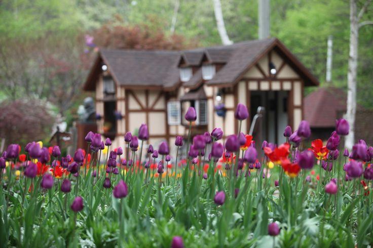 Shakespeare Garden, Farm Herbnara, www.herbnara.com
