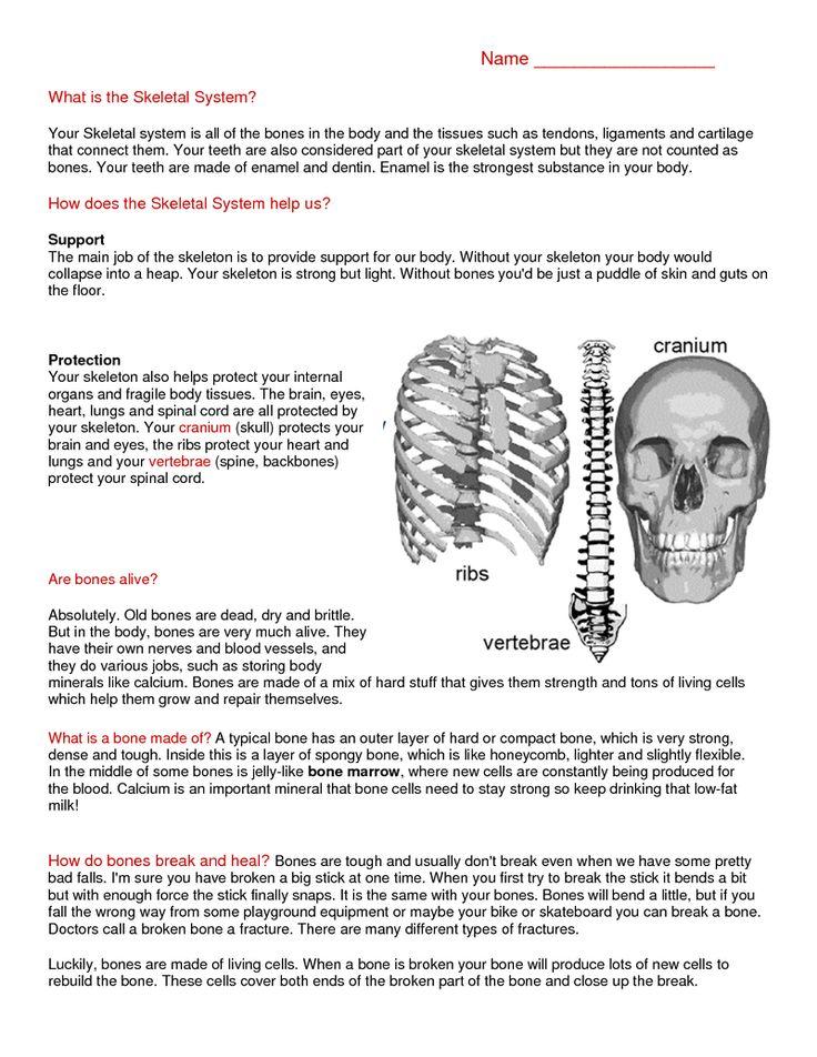 page 1 skeletal system reading science pinterest reading. Black Bedroom Furniture Sets. Home Design Ideas