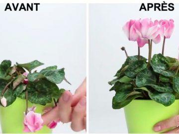 comment enlever la colle des tiquettes de pots en verre foulard garden horticulture et. Black Bedroom Furniture Sets. Home Design Ideas