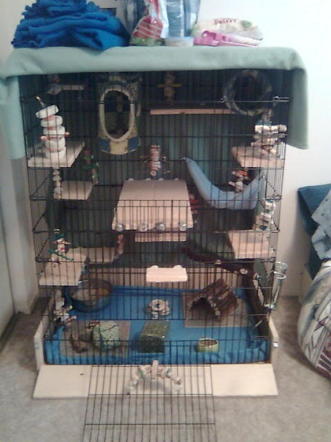Pet Rat Accessories
