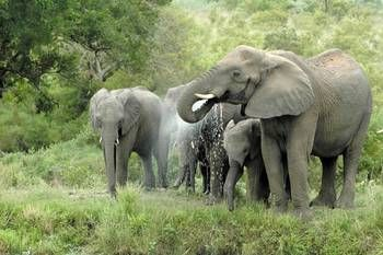 Such beautiful animals! Safari with us at African Outposts and experience a different world of nature! http://africanoutposts.co.za/
